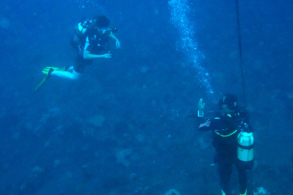 Guided recreational dives with equipment hire